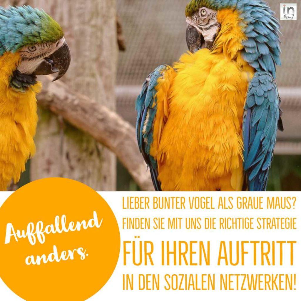 die-eberin-Auffallend-anders-Social-Media-Auftritt-Blog-Webdesign-Werbeagentur-Pforzheim-Post-Instagram-Facebook-Google-my-Business